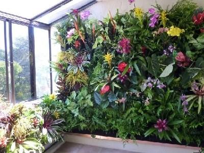阳台真植物墙绿化