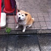 日本的猫猫和狗狗随拍