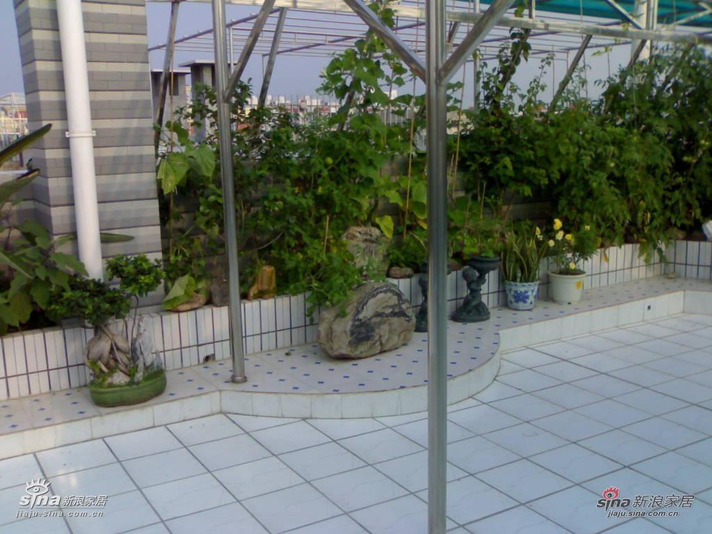 【是顶楼的露台,也是我们的小菜园,老爸在上面