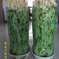 生豆芽简易新方法