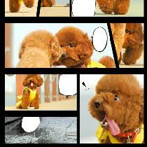 定制宠物故事相册 By 稻糕DG宠物影像
