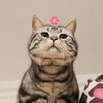 头上带小花的搞怪喵星人