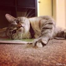 Nala_cat