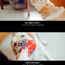 年度静态电影大片 · 杭州导盲犬实录